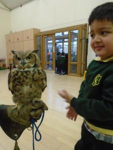 Owl 6